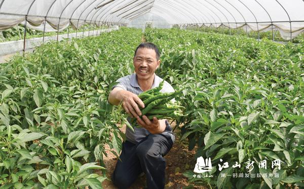 种植蔬菜亩收万元